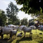 A Szürkemarha Fesztivál megnyitója a VAjdahunyad várában.